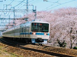 春の写真・画像素材[423493]