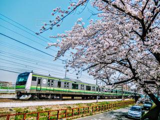 春の写真・画像素材[423495]