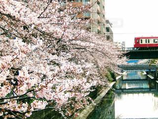 春の写真・画像素材[423499]