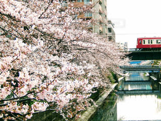 春 - No.423499