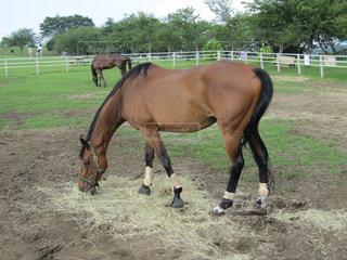 汚れフィールド上に茶色の馬立っての写真・画像素材[756537]