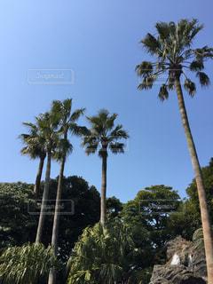 子供,観光,#街#風景#景色,#遊び#楽しい#子育て,#ディズニーランド,#木#美しい#うつくしい#綺麗#きれい