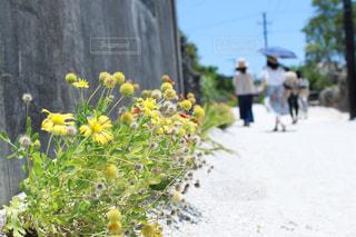 竹富島の写真・画像素材[917436]
