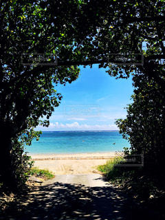 自然,海,空,夏,木,屋外,ビーチ,青,砂浜,海岸,沖縄,旅行