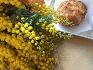 花,黄色,ミモザ,イエロー,シュークリーム