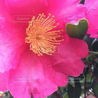 花とハートの葉の写真・画像素材[2301396]