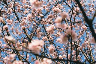 空,春,桜,花見,卒業,卒業式