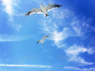 空を飛んでいる鳥の写真・画像素材[1113470]