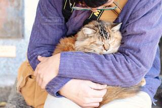 男性,猫,動物,かわいい,ねこ,cat,ツーショット,ちゃいろ