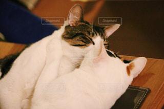 猫の写真・画像素材[384896]