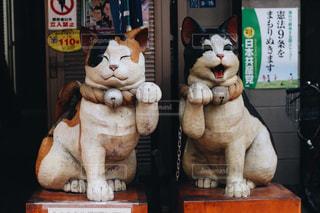 猫,二人組,かわいい,ねこ,cat,ツーショット