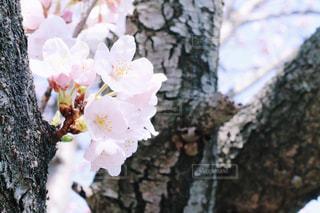 花の写真・画像素材[401943]