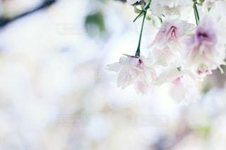春の写真・画像素材[408465]