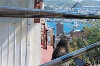 猫,風景,にゃんこ,ねこ,広島,cat,尾道