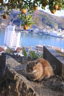 猫の写真・画像素材[435727]