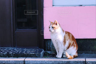 猫の写真・画像素材[471244]