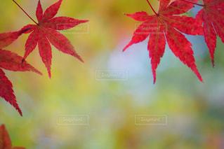 秋の写真・画像素材[528304]