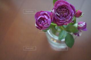 近くの花のアップ - No.852887