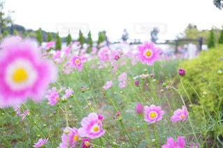 近くの花のアップの写真・画像素材[852893]