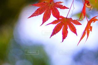 近くの植物のアップの写真・画像素材[852903]