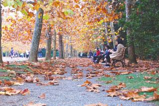 公園の人々 のグループの写真・画像素材[868935]