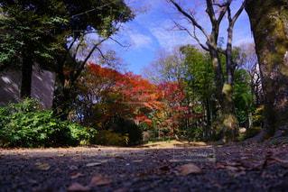汚れパスにツリーの写真・画像素材[870032]