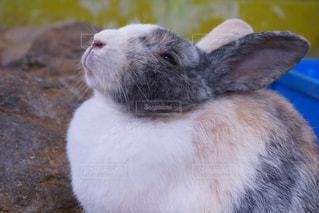 近くに動物のアップの写真・画像素材[870949]