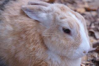 近くに動物のアップの写真・画像素材[870951]