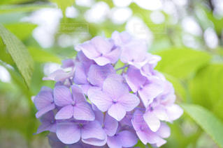 近くの花のアップ - No.870957