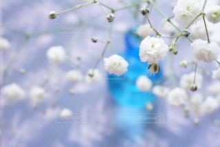 近くの花のアップの写真・画像素材[908860]