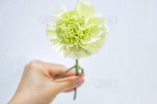 花,フラワーアレンジメント,フラワーアレンジ,花好き,花のある生活,フラワーレッスン,フラワーフォト