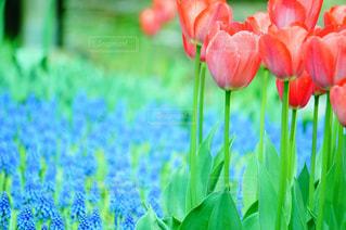 近くの花のアップの写真・画像素材[1131873]