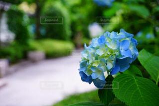 近くの花のアップの写真・画像素材[1216593]