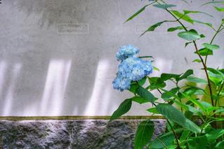 テーブルの上の花の花瓶の写真・画像素材[1216602]