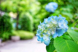 近くの花のアップの写真・画像素材[1216607]
