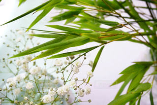 近くの緑の植物をの写真・画像素材[1291132]