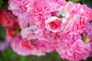 近くの花のアップの写真・画像素材[1434222]