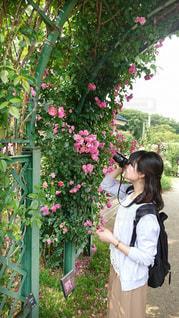 バラを撮る人の写真・画像素材[1589973]