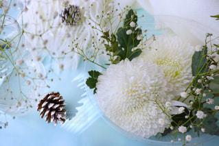 白,ホワイト,菊,カスミソウ,マム