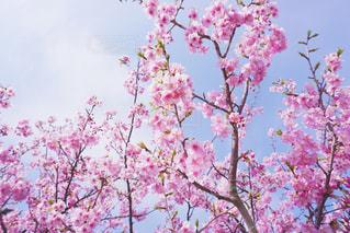 植物にピンクの花の写真・画像素材[1823153]