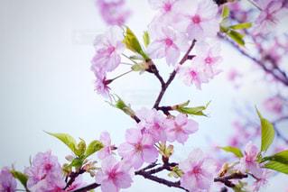 近くの花のアップの写真・画像素材[1823163]
