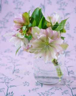 ピンク,パステルカラー,クリスマスローズ,花のある暮らし,ファンシー