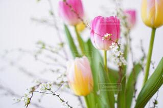 植物の花瓶の写真・画像素材[2979844]