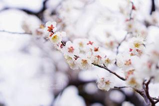 花のクローズアップの写真・画像素材[3018190]