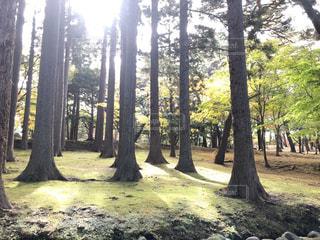 木漏れ日の写真・画像素材[2679806]
