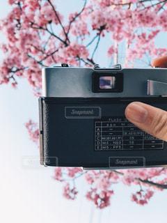 カメラ越しの春の写真・画像素材[1094443]