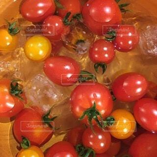 食べ物,果物,トマト,野菜,ミニトマト,畑,採れたて,フレッシュ,ベジタブル,冷やしトマト