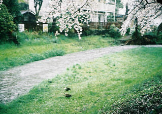 自然 - No.467711