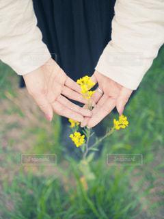黄色い花を持っている手の写真・画像素材[1178931]