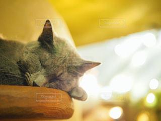 木製テーブルの上に座っている猫の写真・画像素材[1266585]